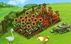 Rüyalar Çiftliği